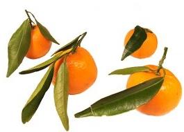 http://www.huile-essentielle.org/IMG/jpg/mandarine.jpg
